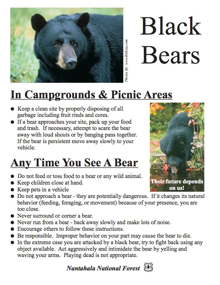 Black Bears in Nantahala